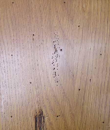 Chêne doré Ant. - A12 25ANT